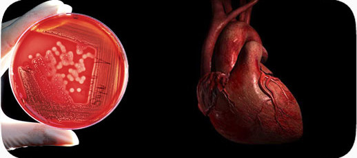 celulas cardiacas