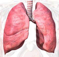 mini pulmão